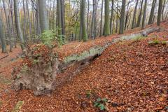 fallen tree - stock photo