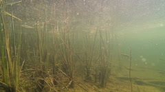 Small fish and pollen at shallow water Stock Footage