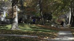 Autumn leaves yard racking neighborhood HD 003 Stock Footage