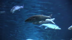 School of fishes in an aquarium Stock Footage