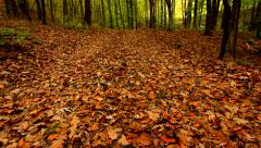 Forest floor covered with dry leaves in autumn Stock Footage