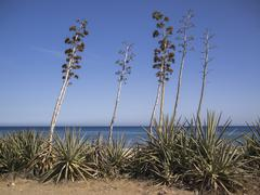 Agave plants in almería, spain Stock Photos