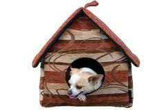 photo of bored puppy chihuahua - stock photo