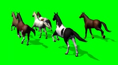 Group running horse - view from behind - green screen Stock Footage