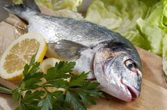 Fresh sea bream Stock Photos
