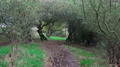 Coppice of hawthorn sloe thicket nature background Stock Footage