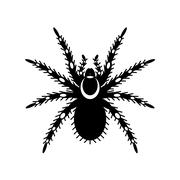 Black & white vector of tarantula - stock illustration