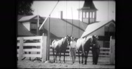Ben Jones and other trainers walking with thoroughbreds Stock Footage