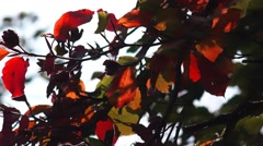 Golden Autumn Tree Leaves nature background Stock Footage