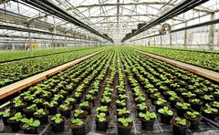 Interior of a commercial greenhouse Stock Photos