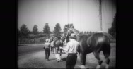 Trainers walking with thoroughbreds Stock Footage