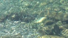 Shoal of baby fish  at shallows zoom out Stock Footage