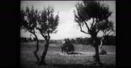 Motorcycles from Italian quartermaster corps delivering supplies Stock Footage