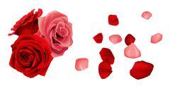Rose with fallen petals Stock Illustration