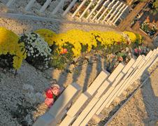 clumps of yellow flowers in the european cemetery graves - stock photo