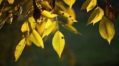 Autumn in park Aleksandriya Stock Footage