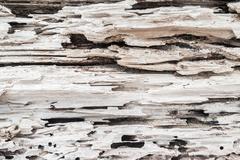 tree  beach sands rotting detail closeup - stock photo