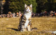 cat sitting in the grass and looking - stock photo