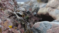 Seaweed in the wind close-up Stock Footage