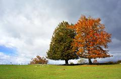 a couple of evergreen and deciduous trees in autumn - stock photo