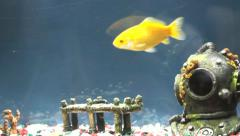Fish Tank Stock Footage