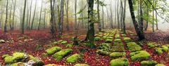 Panorama of a beech forest with sedimentary rocks Stock Photos