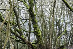 Trees in Grinlow Woods - stock photo