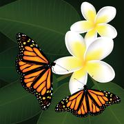 vector frangipani and butterflies - stock illustration