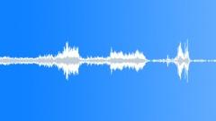 PIG SOUNDS - sound effect
