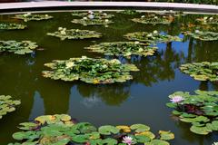 Ukraine - Crimea - Yalta - Nikitsky botanical garden - stock photo