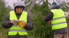 Workers with tablet PC and scissors near the spruce in the forest Stock Footage