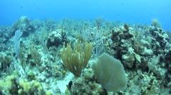 Deep Caribbean Reef Stock Footage