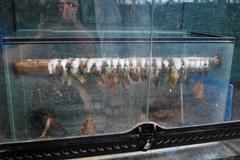 hatchery butterflies - stock photo