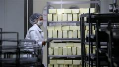 Factory For Production Of Cheese Two Workers Pushing Carts Filled With Cheese - stock footage