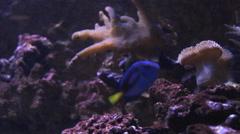 aquarium fish in the aquatic tank - stock footage