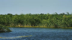 River with green reed grown on the shore Stock Footage