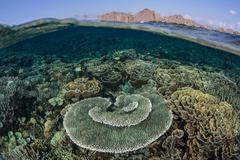 Coral Reef and Arid Island - stock photo