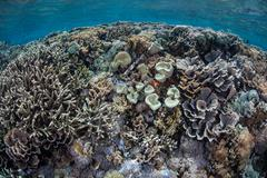 Diverse Tropical Reef - stock photo