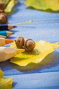 Autumn back school acorns and school Stock Photos