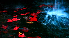 The red maples leaves and beautiful waterfall Stock Footage