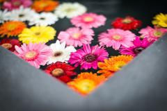 Beautiful multicolored flowers in water. Stock Photos