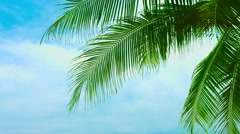 leaves of a coconut palm tree against a beautiful sky - stock footage