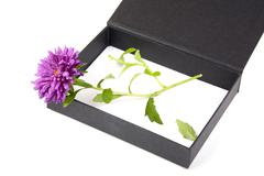 open gift box with  flower isolated - stock photo