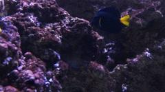 aquatic tank with aquarium fish  - stock footage