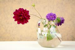 asters and  peony in  glass jug - stock photo