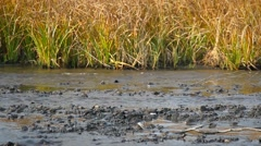 Dirty water in the river Stock Footage