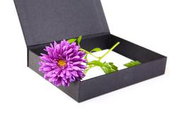 still-life with an aster and  box on a white - stock photo