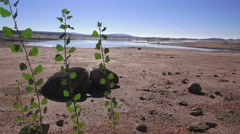 Folsom Lake , new life, dying lake Stock Footage