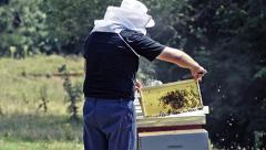 Bees in apiary. beekeeper is shaking the bees from a frame into the hive duri Stock Footage