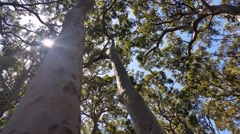 Australian Eucalyptus forests and native vegetation. Stock Footage